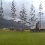 Crane Truck Hire, Tree Suppliers, Tree Felling