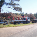 Crane Truck Hire, Tree Felling