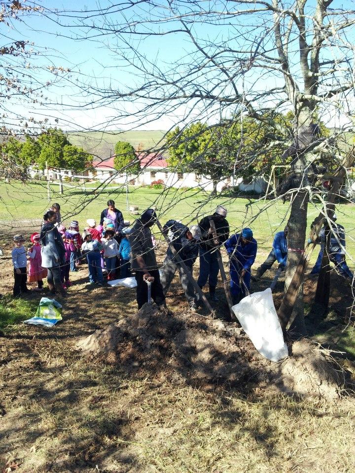 Tree Mulching | Tree Mulch | Moving Trees & Crane Truck Hire