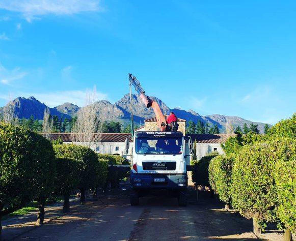 Sustainable Tree Harvesting   Sustainable Development   Moving Trees